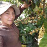Foto del perfil de Acrelina Calderón Quispe